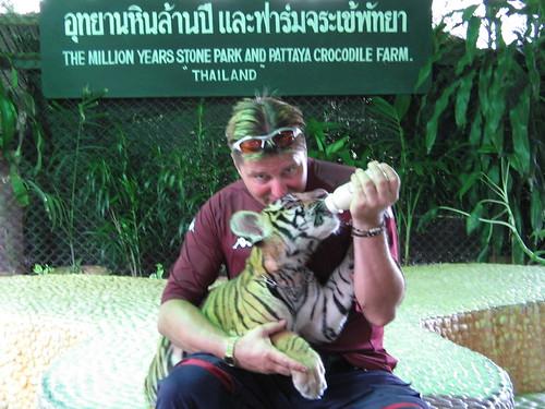 malaysischer Tiger oder Jackson-Tiger Im The Million Years Stone Park and Crocodile Farm  Pattaya  Thailand