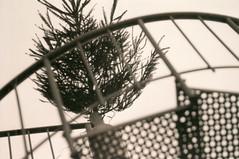 Bnnerup Strand (Juliet Alpha November) Tags: christmas xmas sky tree film analog cn weihnachten denmark stair kodak bokeh himmel treppe 400 fir sw analogue merry dnemark danmark baum tannenbaum frohe