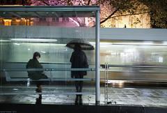 Melbourne In The Rain (Ranga 1) Tags: city nightphotography girls rain night umbrella canon streetlight nocturnal candid australian streetphotography australia melbourne streetscene bourkestreet cinematic tramstop nightexposure davidyoung ef24105mmf4lusm canoneos5dmarkii