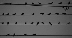 Hieroglyphics (Simos1968) Tags: wires swallow