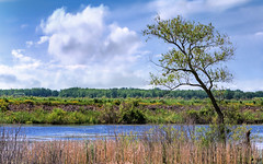 Shiawassee National Wildlife Refuge - A Landscape