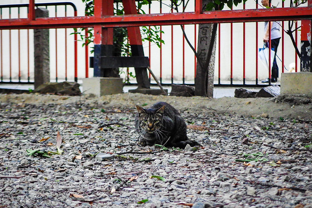 Today's Cat@2015-07-17