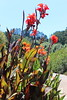 IMG_4585 (cheryl's pix) Tags: california flowers flower berkeley botanicgarden botanicalgardens botanicalgarden botanicgardens berkeleyca berkeleybotanicalgarden ucbotanicalgarden universityofcaliforniabotanicalgarden universityofcaliforniabotanicalgardenatberkeley