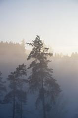IMGP5802 (laurec.) Tags: allemagne balade neige oppenau