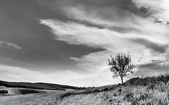 DSC_8141 (silviu_z) Tags: clouds nature blackwhite nikon d810 1635vr outdoor romania silviu zlot tree alone landscape hill field