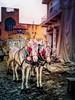 India wedding (Nick Kenrick..) Tags: india pushkar rajasthan hindu mughal exotic attithidevobhavo horse