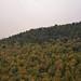 Prolongement de la forêt d'Akfadou
