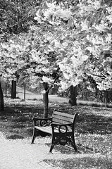 Park bench (Nick Jacobsen (nickjoj)) Tags: park flowers trees white lake black bench relax spring sitting blossom seat newquay sit boating sat