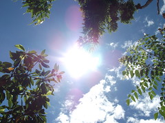 A sunny day.... (Rockingfire kumar) Tags: blue trees sky sun sunlight green ecology clouds atmosphere bluesky environment greenery pleasant globalwarming sunnyday kumar solarenergy brightsun photosynthesis pleasantday pleasantatmosphere rockingfire rockingfirekumar pleasantwethear aplesantday