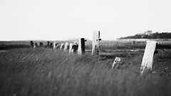 A grey day. (whooosh.) Tags: blackandwhite monochrome grass fence coast post windy rainy northsea sw 169 sdstrand sanktpeterording
