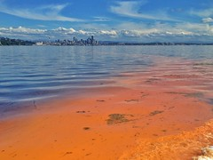 Noctiluca bloom near Seattle June 17, 2013. (EcologyWA) Tags: county red king sound algae blooms puget noctiluca
