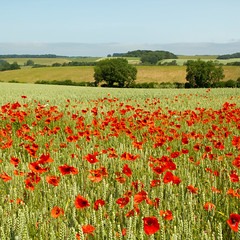 They call it Poppyland ...