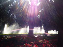 O belo jardim da Praça da Liberdade (guimadaleno) Tags: flowers trees brazil urban sunlight nature beautiful brasil square minas gerais day liberdade sunny clear lensflare praça lensburst