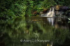 Small waterfall at Stanley Park (aartiv1221) Tags: canada stanleypark vancouverbc hdr
