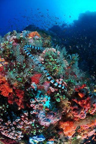 snake pantar island