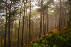 Fall Forward (Vemsteroo) Tags: road wood autumn trees mist tree fall nature leaves fog pine forest sunrise canon landscape death leaf oak tranquility illuminated intriguing 5d sunburst mystical british r
