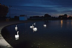 Canoe Lake (PD3.) Tags: uk england lake night dusk hampshire canoe swans boating portsmouth southsea hants