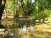 """PIC_0028 (lilired) Tags: flickrdiamond goldstaraward """"exoticimage"""" mygearandme onlythebestofflickr"""