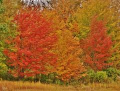 Colors Of Autumn (Bill Bunn) Tags: autumn fall fallcolors maine autumncolors falmouth