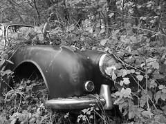 Overgrown Jaguar (Hammerhead27) Tags: auto old blackandwhite abandoned nature overgrown car trash junk rust decay monotone voiture foliage jaguar wreck reclaim undergrowth