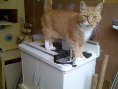 Workshop Cat