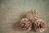 Christmas Feeling (. Marzo | Photography .) Tags: santa christmas wood natal pine still noel pines minimalism hanukkah pinha pinheiro pinhas natalino