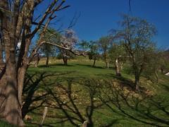 Orchard (matthewbeziat) Tags: spring orchard westvirginia farms elkins ruralamerica randolphcounty
