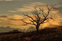 LAST LIGHT (mark_rutley) Tags: landscape hampshire deadtree winchester singletree lonetree lonelytree winchesterhill thelonetree