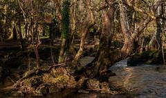 Paraiso - Verdes - Carballo (Jose Losada Foto) Tags: espaa naturaleza verde sol nikon rboles photographer galicia galiza fotgrafo fotografa d90 nikond90 joselosada