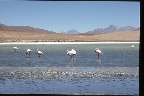 "Bolivia (Salar de Uyuni) • <a style=""font-size:0.8em;"" href=""http://www.flickr.com/photos/103823153@N07/12033767756/"" target=""_blank"">View on Flickr</a>"