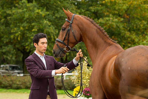 Alex with Don Geniro at the World Young Horse Championships in Le Lion 2013 Photo Libby Law