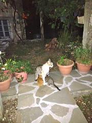 Guesthousekatten