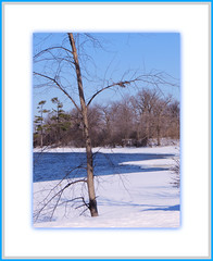 Tipping! (bigbrowneyez) Tags: blue trees winter sky snow canada cold nature wet water beautiful canon reflections river landscape dof branches ottawa scenic natura fresh frame serene tranquil tipping cornice bello bellissimo pinkcanon march2014