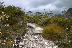 Cradle Mountain Gravel Path (mdalmuld) Tags: park trees cloud mountain canon track path australia tasmania boardwalk gravel cradlemountain canon7d