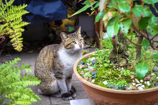 Today's Cat@2014-04-20
