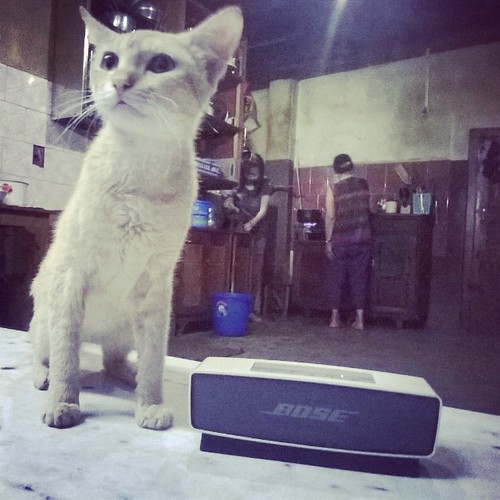 Image result for cat and bose music system