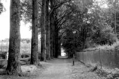 Series (Spotmatix) Tags: camera film nature monochrome lens landscape effects countryside belgium parks places m42 chinon brabantwallon nivelles polypanf iso050