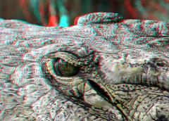 Crocodile Blijdorp 3D (wim hoppenbrouwers) Tags: 3d blijdorp anaglyph stereo crocodile redcyan zoorotterdam crocodileblijdorp