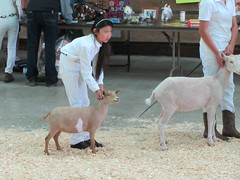 Sheboygan Fun Goat Show (Snapshots by Nixy J Morales) Tags: goats sheboygan 4h ffa showmanship