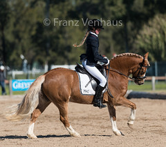 150704_YR_Champs_Sat_2771.jpg (FranzVenhaus) Tags: horses sydney young australia riding newsouthwales ponies athletes aus equestrian supporters riders officials dressage spectatorsvolunteers