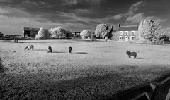 A North Yorkshire Village (johnhjic) Tags: johnhjic nikon d90 helperby northyorkshire ir sky tree trees farm farmhouse horses horse windows window door barn clouds cloud house fence greatbritain blackwhite black white bw