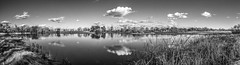 Wetlands Panorama Monochrome (randyherring) Tags: ca california wetland park monochrome elkgrove sky waterfowl centralcaliforniavalley afternoon aquaticbird outdoor bw blackandwhite cosumnesriverpreserve clouds galt unitedstates us