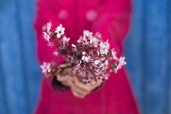 I give you my Spring (Nathalie Le Bris) Tags: azul blau bleu blue fleur flor flower main rose spring primavera printemps woman mujer internationalwomensday