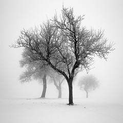 My Dream of Peace (ArztG.|Photo) Tags: frozen tree treees winter fine art austria atmosphere arztg|photo fog mood yup myfavs