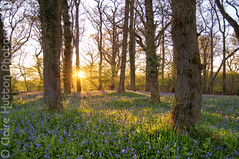 (Claire Hutton) Tags: wood uk flowers blue trees light sunset wild summer sun colour green nature bluebells woodland landscape outdoors spring purple dorset flare copse brnaches nikond90