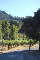 (mschout) Tags: california usa winery napa reverie