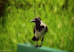 The Bird (yusu falaa1) Tags: camera flowers green nature birds photography shots egypt capturedmoments streamzoo