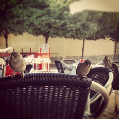 Hungry birds... . To catch a thief 2 - Atrapa a un ladrn 2 . 5 minutes later . (Dr.Phibes) Tags: madrid birds square pajaros squareformat hungrybirds angrybirds iphoneography instagramapp