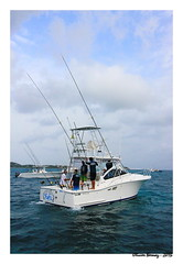 Billfish Tournament St Martin 2013 (ozantilles) Tags: tournament sxm billfish