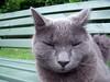 (SofiDofi) Tags: cute face oslo bench outdoors furry feline august snooze asleep gk sagene greykitty upandclose summer2009